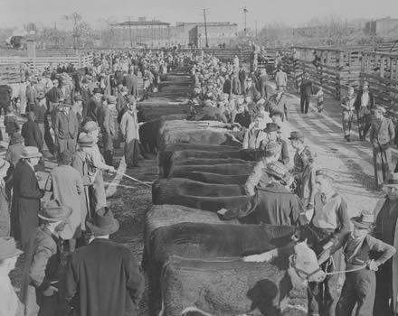 4-H Beef Show, circa 1930s