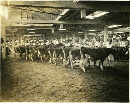 4-H Dairy 1929 competition